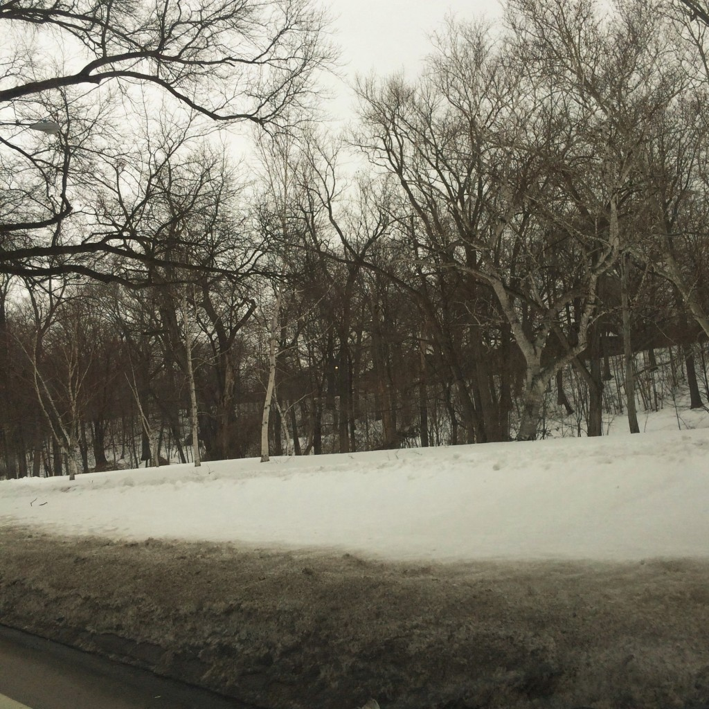 ombre snow and sycamores